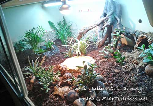 vivarium for Indian star tortoises