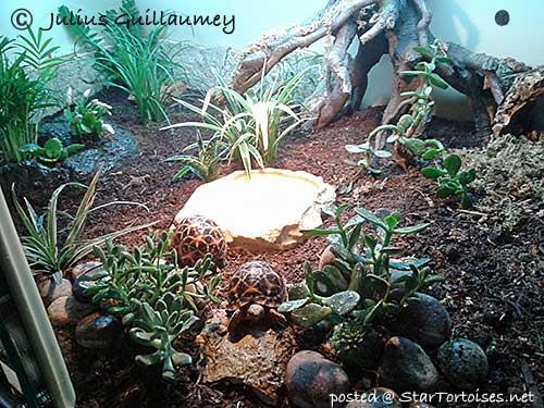 Other Tortoise Keepers Setups Vivariums