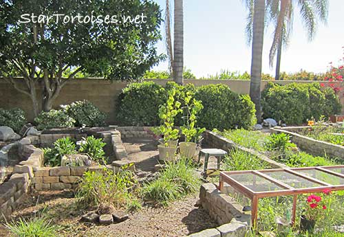 outdoor tortoise pens